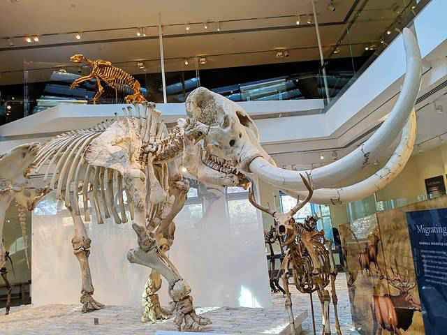 Natural History Museum of Los Angeles (22)