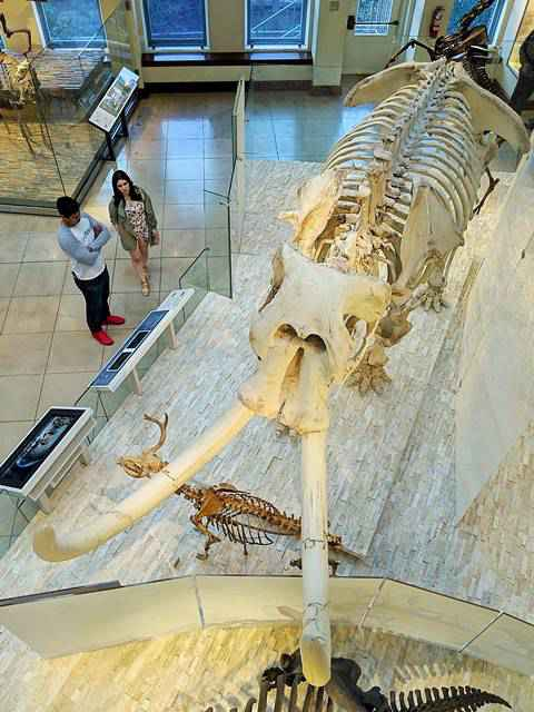 Natural History Museum of Los Angeles (24)