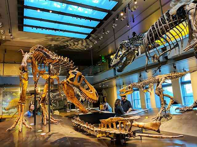 Natural History Museum of Los Angeles (26)