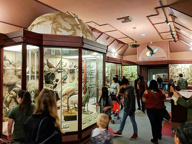 Natural History Museum of Los Angeles (7)