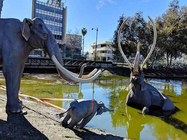 The La Brea Tar Pits and Museum (1)