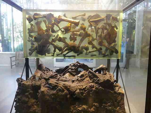 The La Brea Tar Pits and Museum (15)