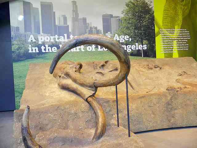 The La Brea Tar Pits and Museum (6)