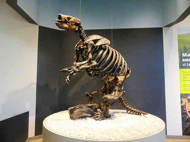 The La Brea Tar Pits and Museum (7)