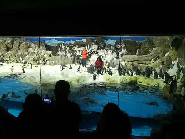 SeaWorld San Diego (18)