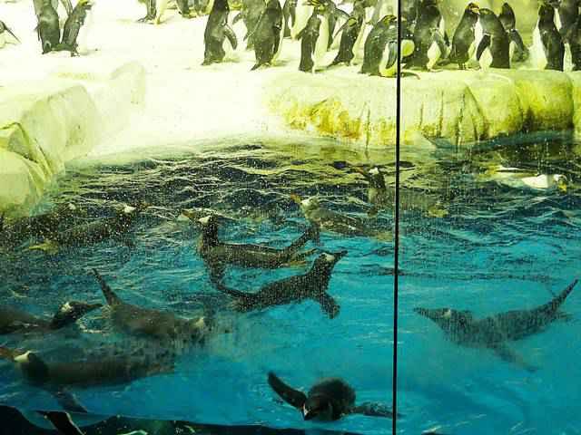 SeaWorld San Diego (19)
