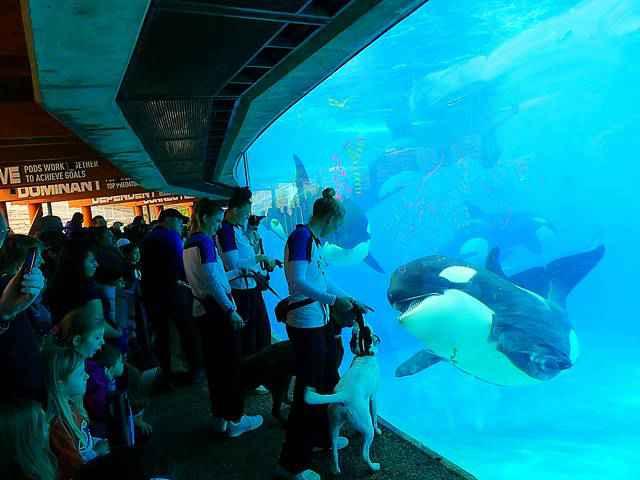 SeaWorld San Diego (2)