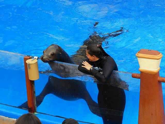 SeaWorld San Diego (24)