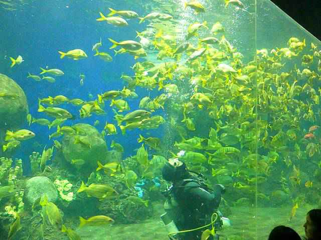 SeaWorld San Diego (27)