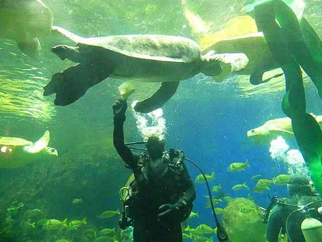 SeaWorld San Diego (28)