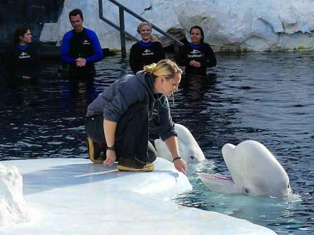 SeaWorld San Diego (32)