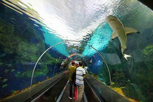 SeaWorld San Diego (5)