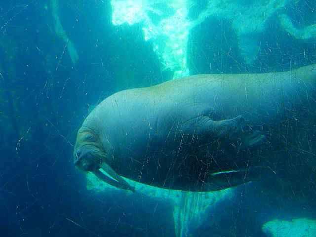 SeaWorld San Diego (8)