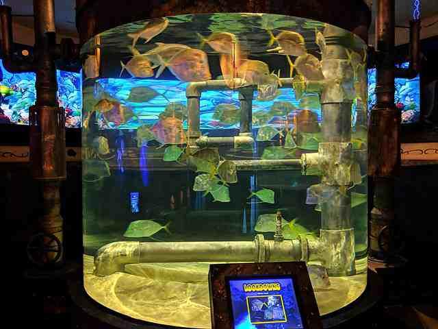 Downtown Aquarium (1)