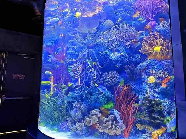 Downtown Aquarium (11)