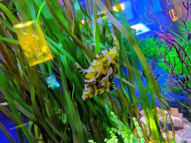 Downtown Aquarium (12)