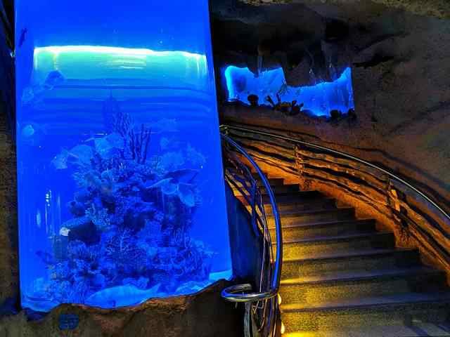 Downtown Aquarium (17)