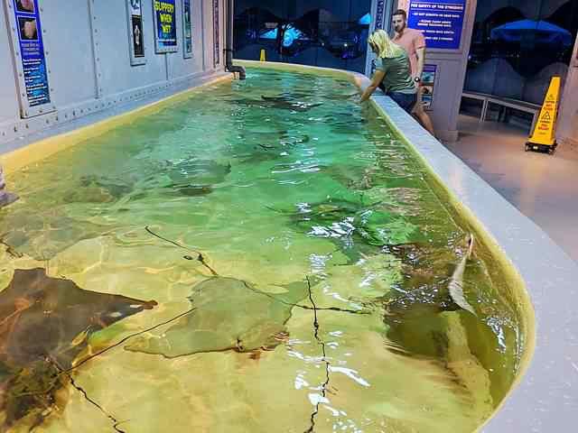 Downtown Aquarium (18)