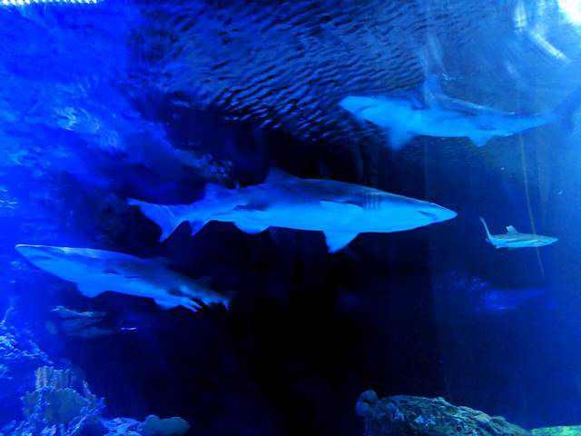 Downtown Aquarium (21)