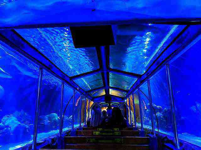 Downtown Aquarium (29)