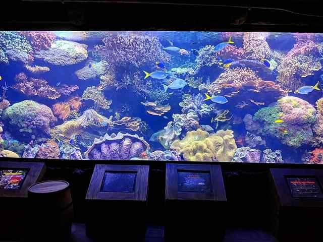 Downtown Aquarium (4)