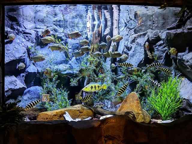 Downtown Aquarium (6)