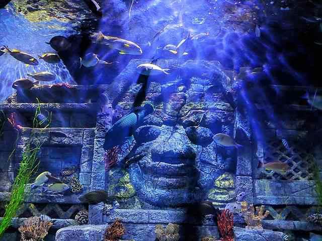 Downtown Aquarium (9)