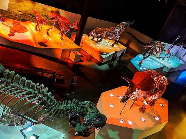 Houston Museum of Natural Science (22)