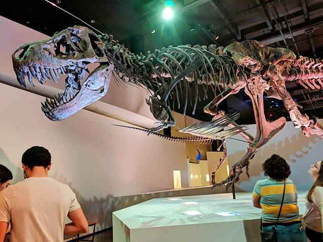 Houston Museum of Natural Science (9)