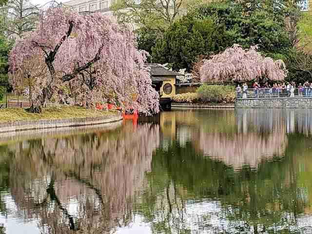 Brooklyn Botanic Garden NY (16)