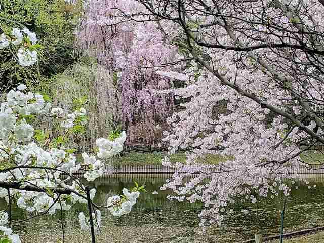Brooklyn Botanic Garden NY (18)