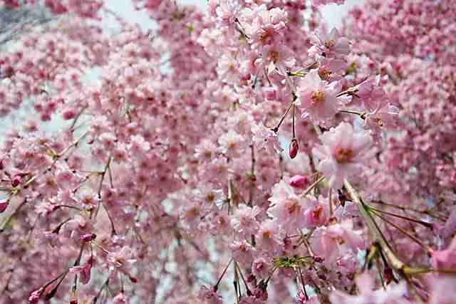 Brooklyn Botanic Garden NY (2)