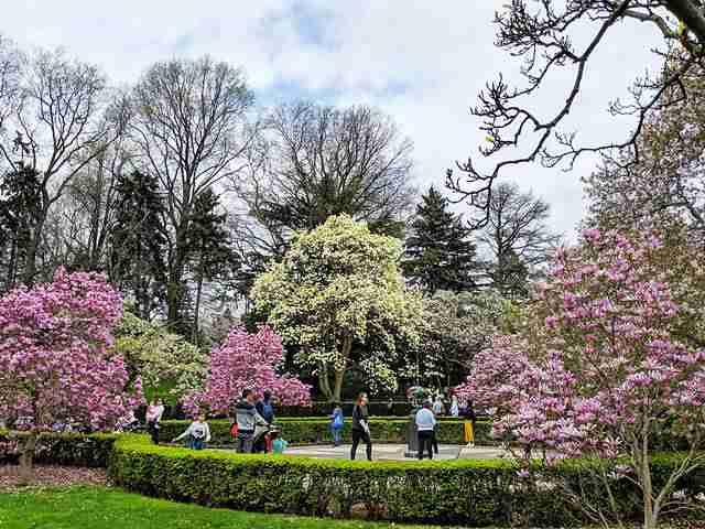 Brooklyn Botanic Garden NY (21)