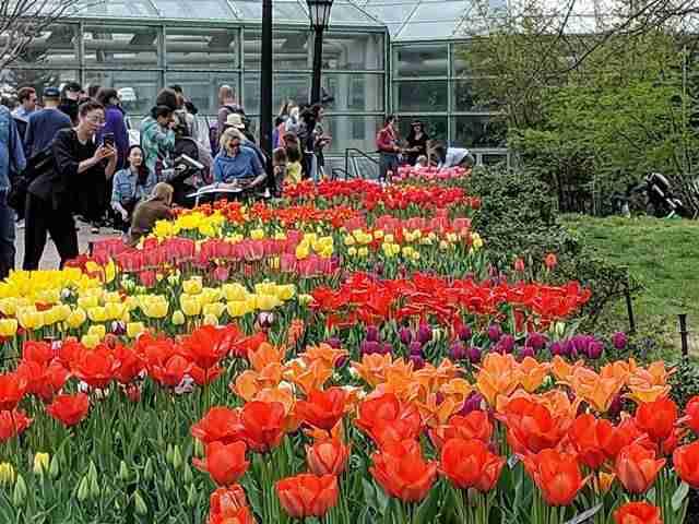 Brooklyn Botanic Garden NY (29)