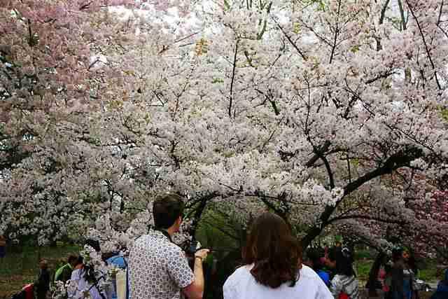 Brooklyn Botanic Garden NY (3)
