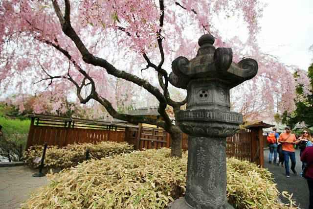 Brooklyn Botanic Garden NY (31)
