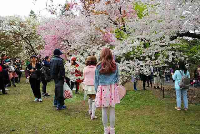 Brooklyn Botanic Garden NY (4)