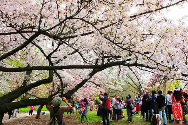 Brooklyn Botanic Garden NY (5)
