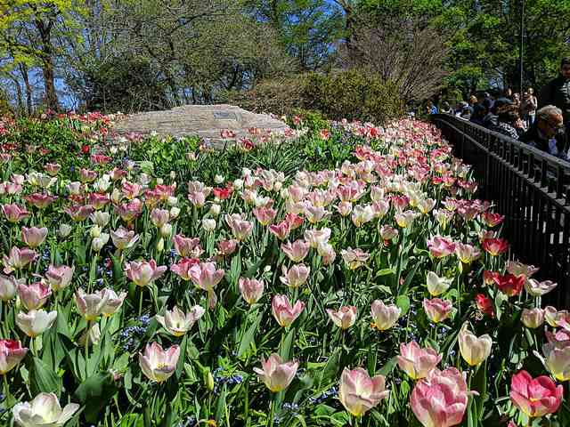 Central Park New York (11)