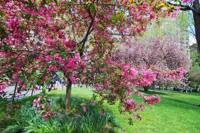 Madison Square Park NY (10)