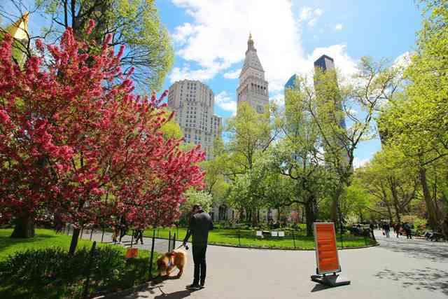 Madison Square Park NY (11)