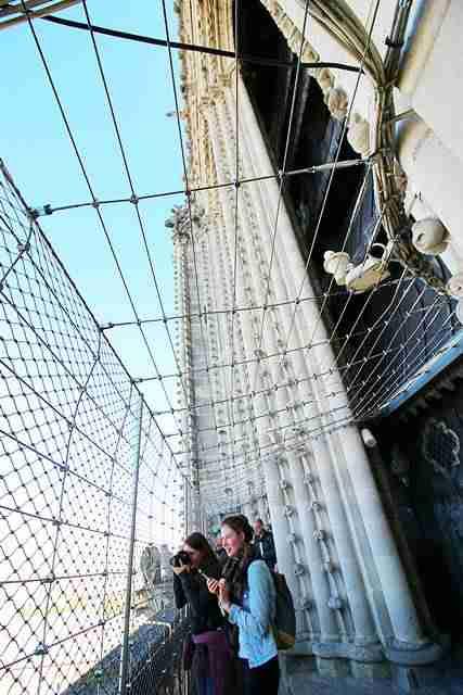 Notre Dame Paris (12)