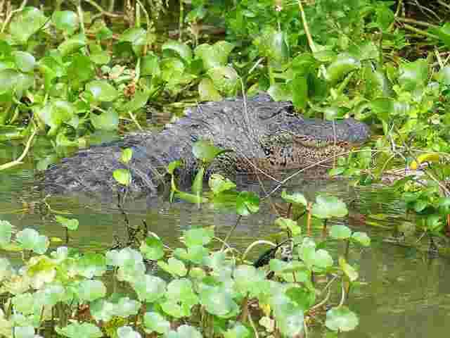 Awamp Tour (2)