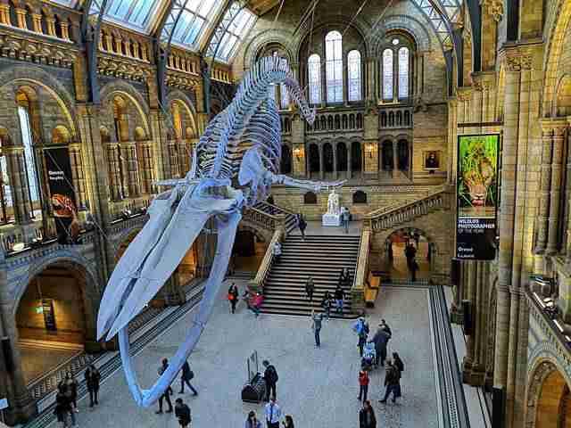 Natural History Museum London (25)