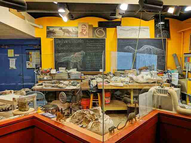 The Academy of Natural Sciences of Drexel University (23)