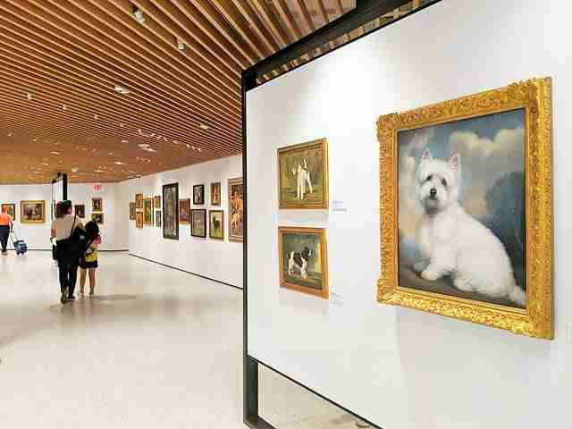 AKC Museum of the Dog NY (16)