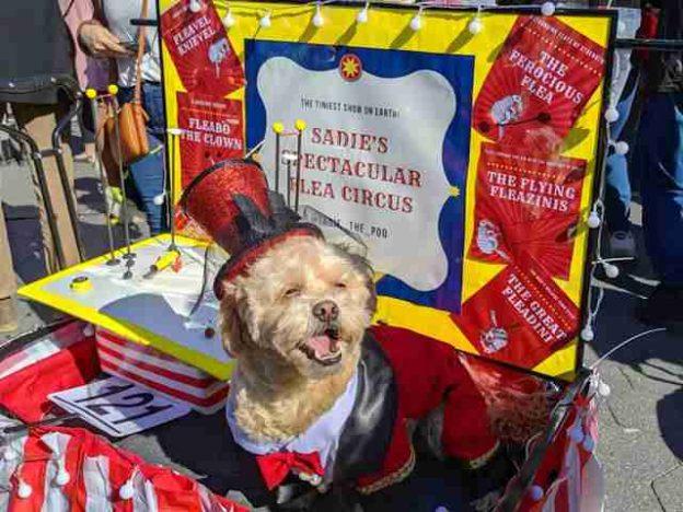 Dog Day Halloween Costume Party Parade Washington Square Park (2)