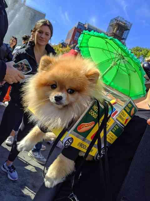 Dog Day Halloween Costume Party Parade Washington Square Park (3)