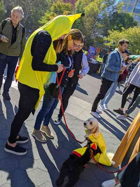 Dog Day Halloween Costume Party Parade Washington Square Park (5)