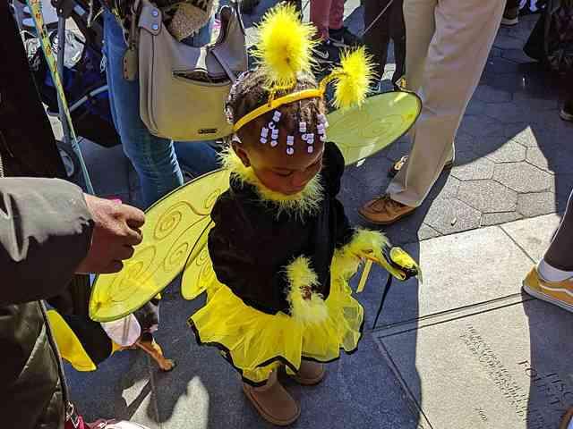 Dog Day Halloween Costume Party Parade Washington Square Park (9)